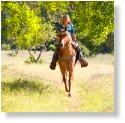 Click the link to the right ''Trailtrotter Program'' Explore the Forest on Horseback for details.
