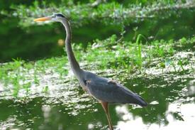 Withlacoochee wildlife abounds. Birds, frogs, turtles, tortoises, aligators... tens of thousands of species of plants, insects, bugs, trees and animals